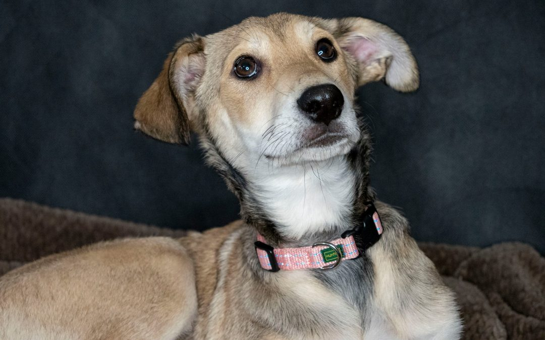 Amy – ADOPTED
