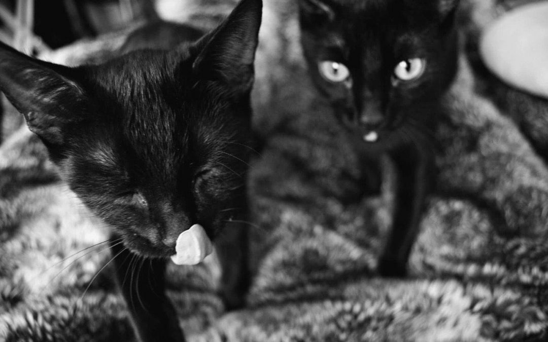 Spook and Whisper – ADOPTED