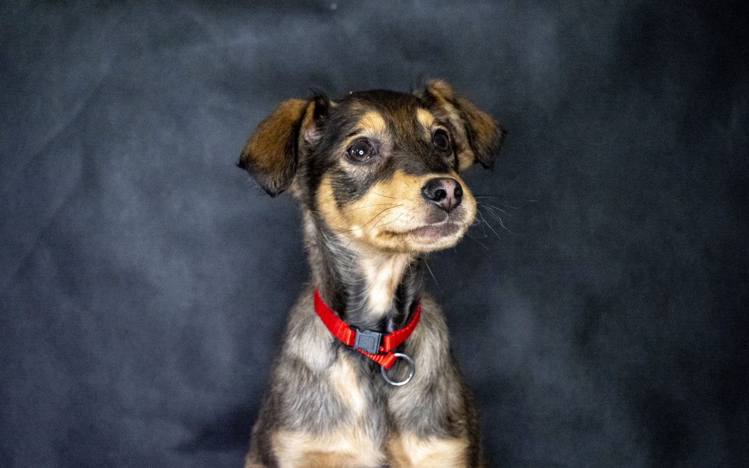 Pippin – ADOPTED