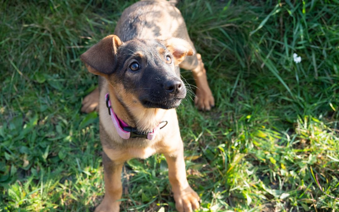 Filou – ADOPTED