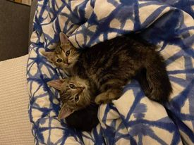 Zac and Zoe – ADOPTED