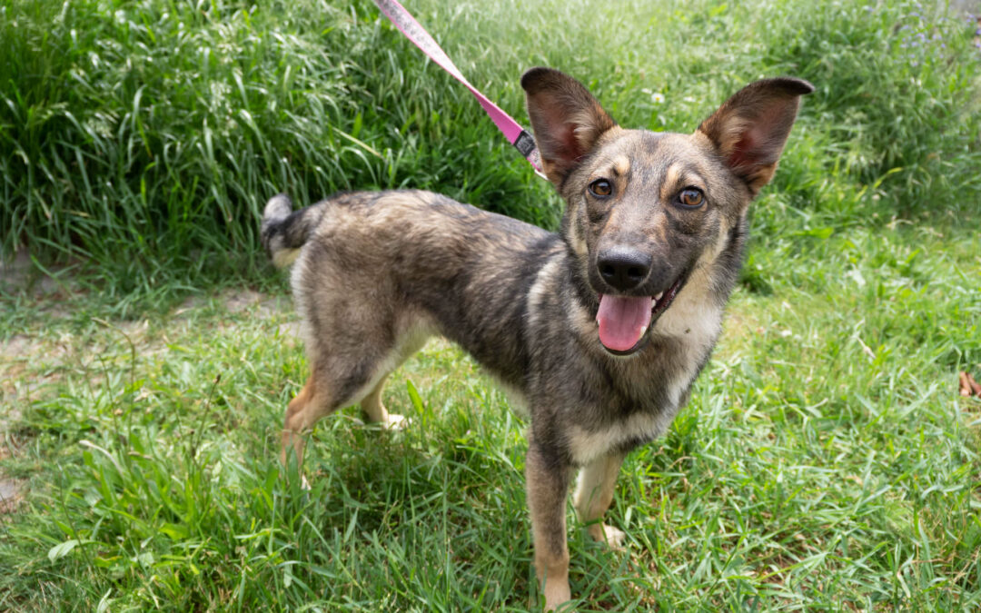 Zippy – ADOPTED