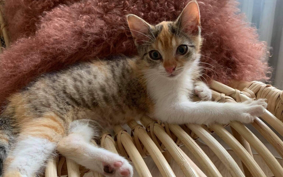 Pansy – ADOPTED
